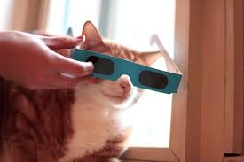 Can You Go Blind By Looking At The Sun Your Pet Go Blind From The Solar Eclipse