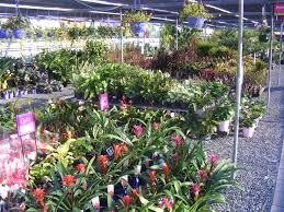 nursery tanby garden centre