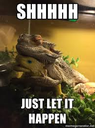 Snuggle Meme - we gave our bearded dragon a toy lizard now he s attached and won