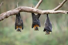 squirrels and bats tonja u0027s gatherings