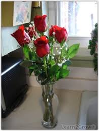 How Much Is A Dozen Roses Prolonging The Vase Life Of Cut Roses Gardening