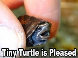 Turtle Meme - frank the turtle