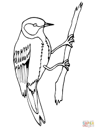 wren bird coloring page free printable coloring pages