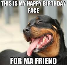 Birthday Meme Dog - 20 funny happy birthday memes sayingimages com