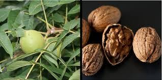 grow fruit nut trees zone 5 7 u0026 living