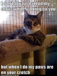 I Don T Always Memes - animal memes the most interesting cat in the world and you re