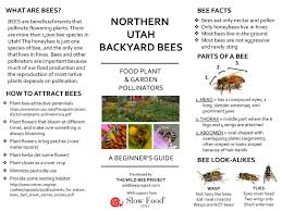 utah bee guide u2014 wild bee project urban wild bees slc ut us