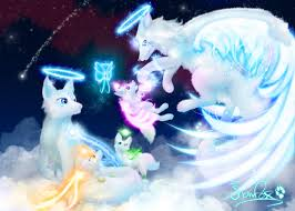 special feature the angel foxes by martith on deviantart