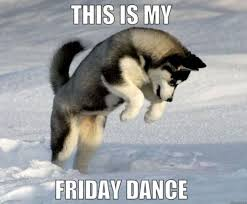 Dancing Dog Meme - 20 husky memes you ll find too cute sayingimages com