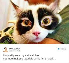 Cats Meme - 35 most meme tastic twitter cats of 2016 brain berries