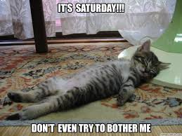 Lazy Meme - cat