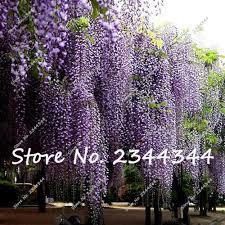 online get cheap climber flowering plants aliexpress com