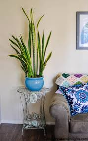 10 unexpected places to decorate your home with indoor plants