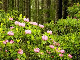 Pretty Plants by Forest Flowers Bushes Floral Nice Path Plants Trees Nature