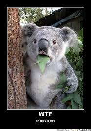 Koala Meme Generator - angry koala meme koala best of the funny meme