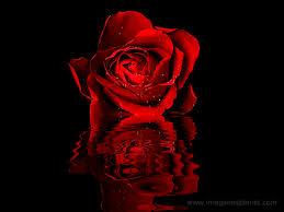 imagenes de amor con rosas animadas imagenes más bonitas de rosas animadas con movimiento imagenes
