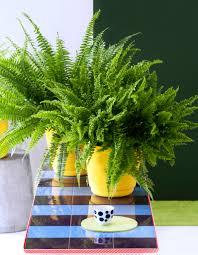 plante d駱olluante chambre plantes dépolluantes les cinq plantes dépolluantes les plus