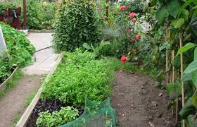 planting a vegetable garden how did i do it