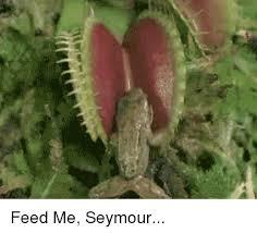 Feed Me Seymour Meme - feed me seymour feed me meme on me me