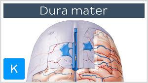 Anatomy And Physiology Of The Brain Dura Mater Meninges Of The Brain Human Anatomy Kenhub Youtube