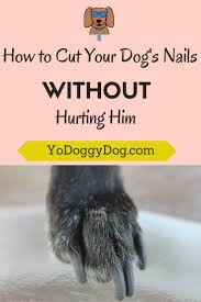 how to cut a dog u0027s nails without hurting him