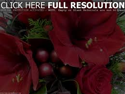 christmas flowers images u2013 happy holidays