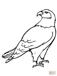 coloring extraordinary simple hawk drawing bird coloring