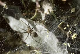 utah u0027s dangerous spiders
