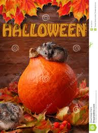 halloween autumn background two hamsters in autumn scenery for halloween stock photo image