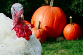 thanksgiving facts and myths for 2015 17 trivia about