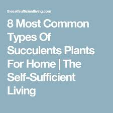 the 25 best types of succulents plants ideas on pinterest