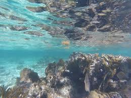 san pedro belize snorkeling sunbreeze suites