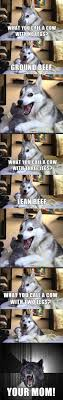 Pun Husky Meme - 60 best pun husky images on pinterest funny stuff ha ha and funny