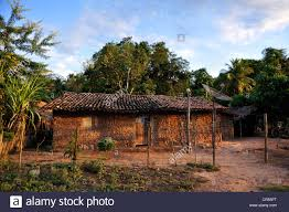 Traditional House Traditional House Made Of Mud Amazon Rain Forest Maranhao