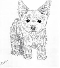 shih tzu coloring pages lovely yorkie coloring pages 71 on