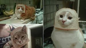 Cat In Bread Meme - hot new internet meme breading cats