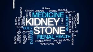 Kidney Anatomy And Physiology Video Kidney Stone Animated Word Cloud Text Design Animation Motion