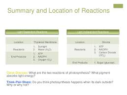 What Happens During The Light Dependent Reactions Of Photosynthesis Lesson Plan Revised