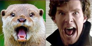 Benedict Cumberbatch Otter Meme - benedict cumberbatch resembles an otter album on imgur
