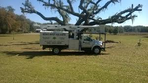 browns tree brown s budget tree service 941 613 1878 thumbnail photos