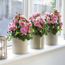 indoor plants for home decor free indoor plants for home decor
