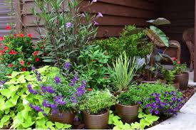 Plant Combination Ideas For Container Gardens - plants trendy container garden plant combinations images of