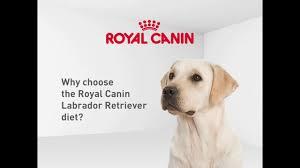 royal canin labrador retriever diet dog food u2013 australia youtube