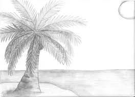 page 2 for query drawing picture of coconut tree picturespider