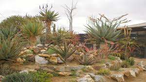 small rock garden design ideas home design ideas
