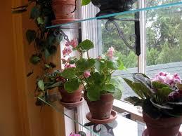 download window garden shelves solidaria garden