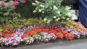 new york city fall flowers u0026 queens annual u0026 perennial flowers