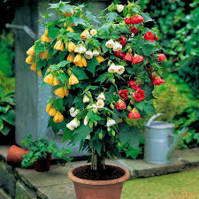 44 best shrubs for containers best container gardening plants