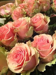 458 best roses images on pinterest flowers beautiful roses and