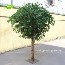 miniature banyan tree miniature banyan tree suppliers and